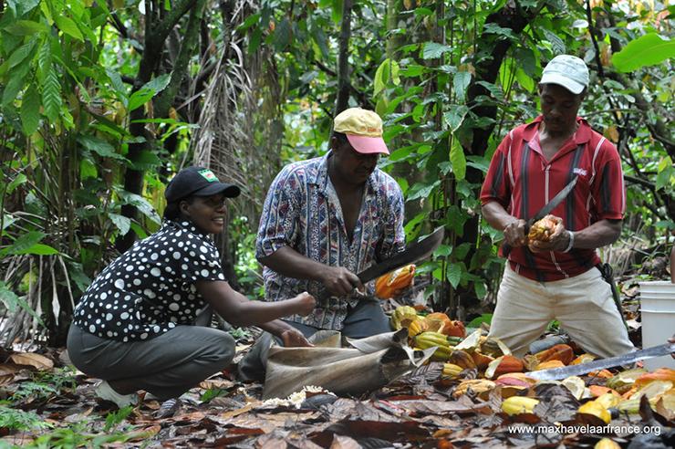 Rolnicy ze spółdzielni CONACADO w pracy