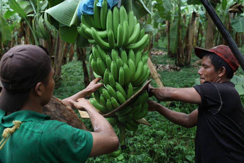 12956scr-banans-work