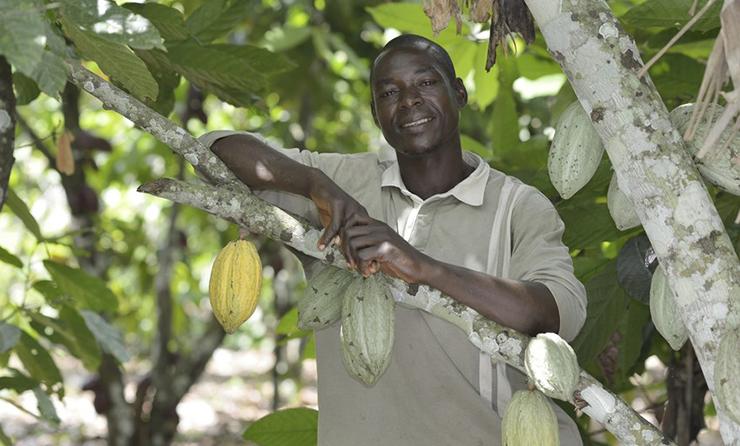 Dembele Mamdou, rolnik ze związku spółdzielni ECOOKIM