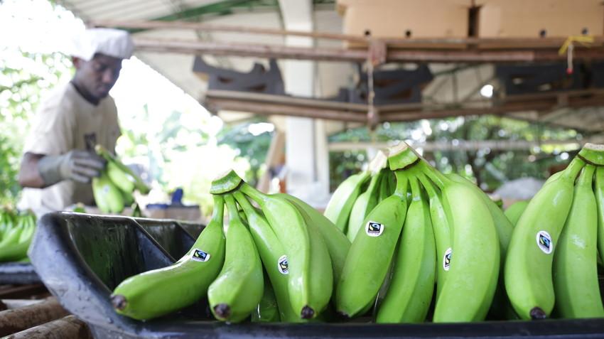 22477scr-banana