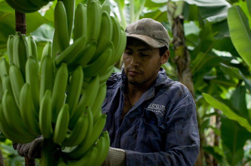 9665-banana-work2