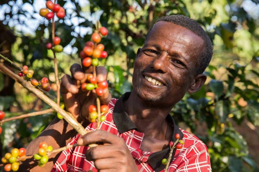 Rolnik ze spółdzielni Fairtrade OFCU w Etiopii