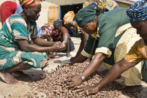 Kobiety ze spółdzielni Akoma produkującej masło shea w Ghanie