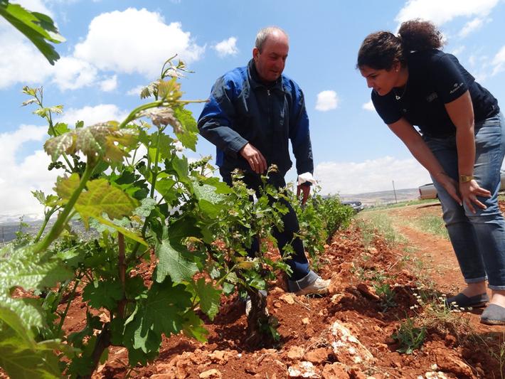 Producent wina ze spółdzielni Coopérative Coteaux d'Héliopolis w Libanie